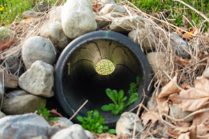 French drain in lawn. D & F Plumbing in Portland OR & Vancouver WA talks about how to drain water from your yard.